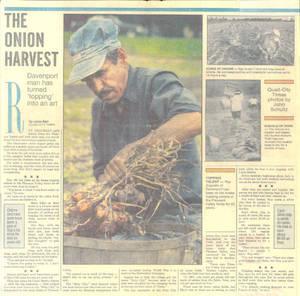 OnionHarvest.jpg